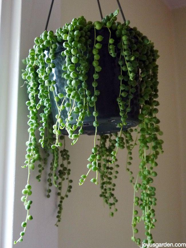Pin On Hometalk Gardening
