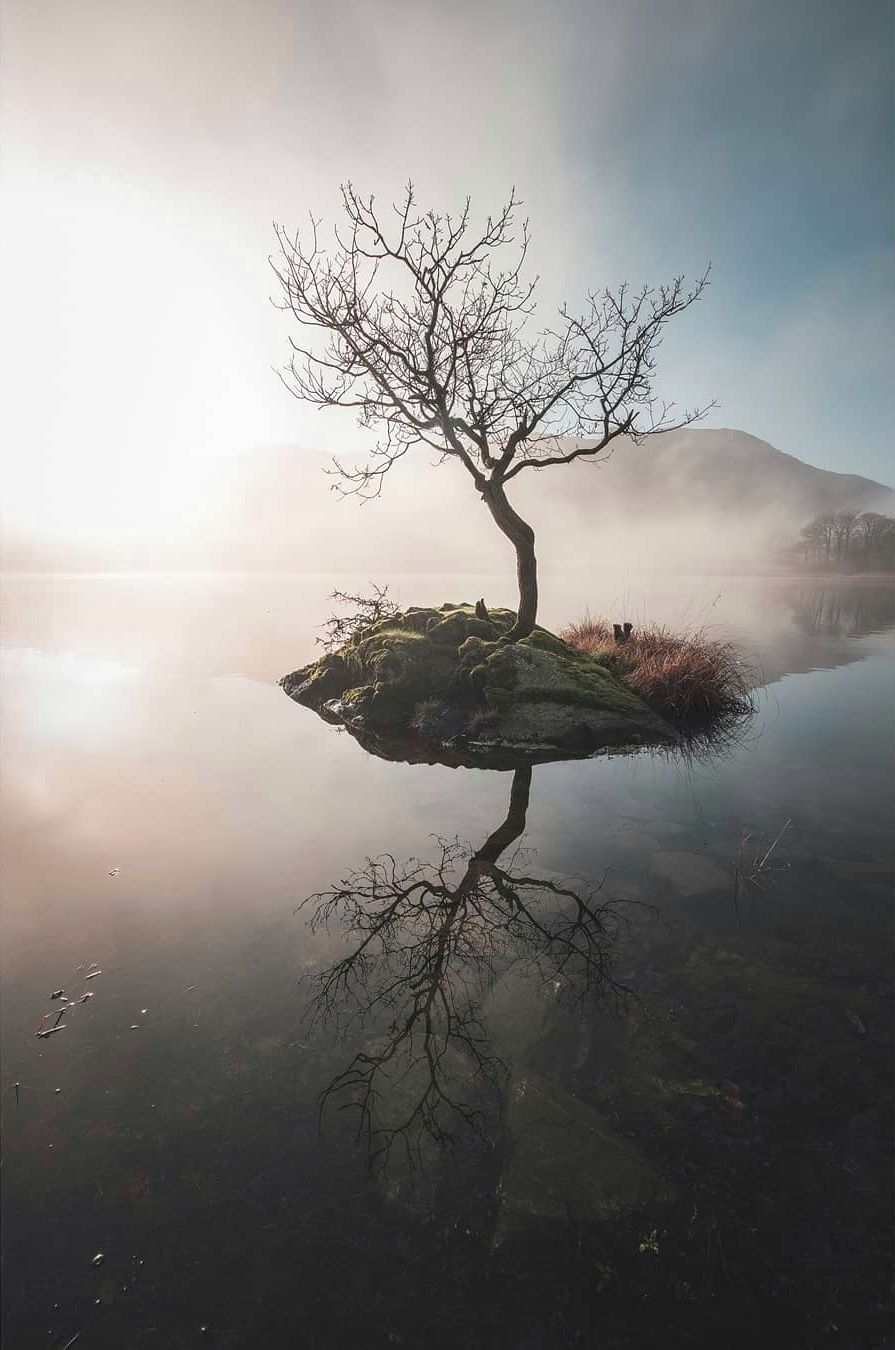 Tranquil Tree The Lake District England Beautifulnature Naturephotography Photography Earthpor Lake District Lake District England Landscape Photography
