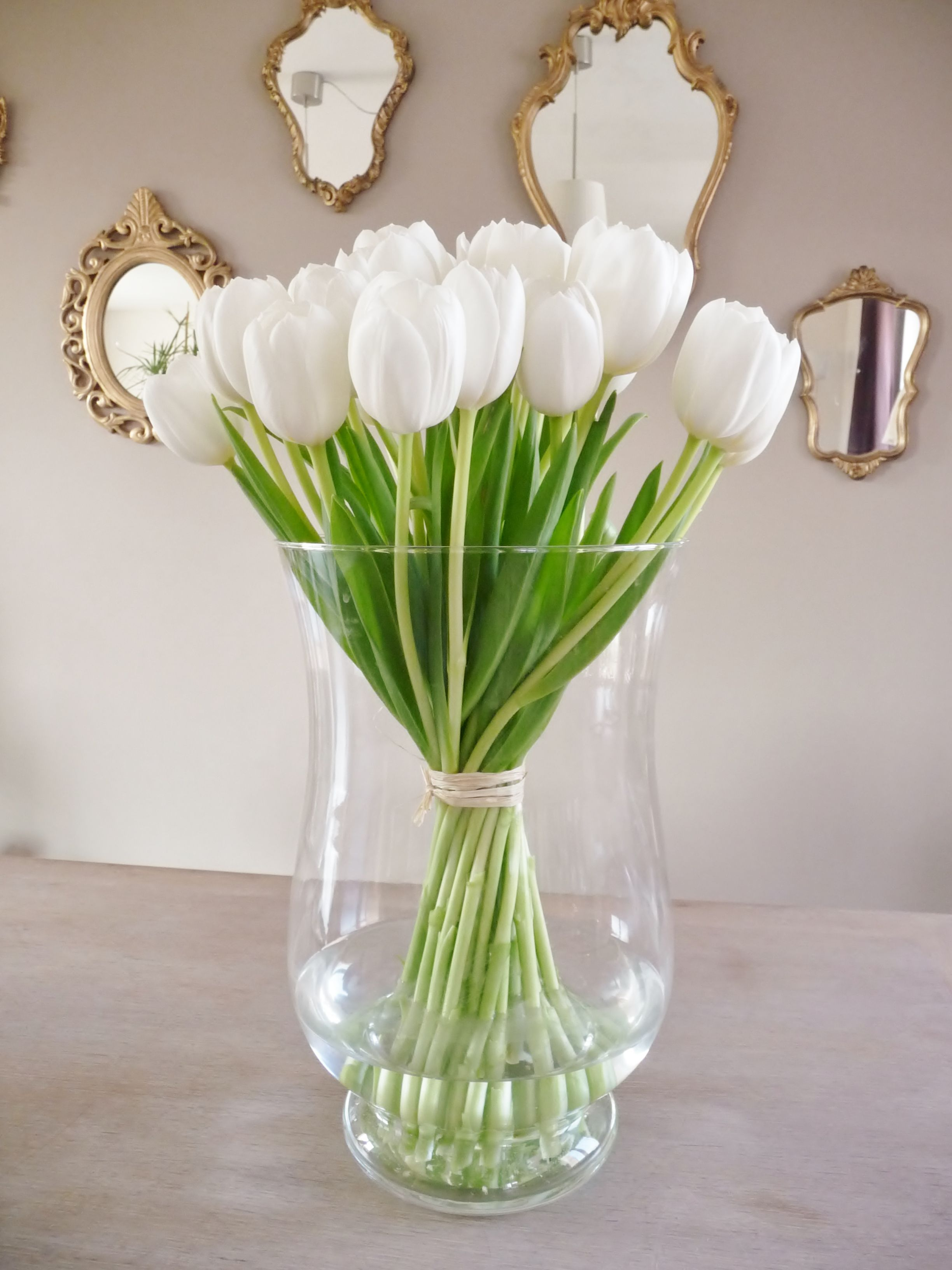 Bouquet de tulipes blanches botany days tulipes tulipes for Bouquet de tulipes