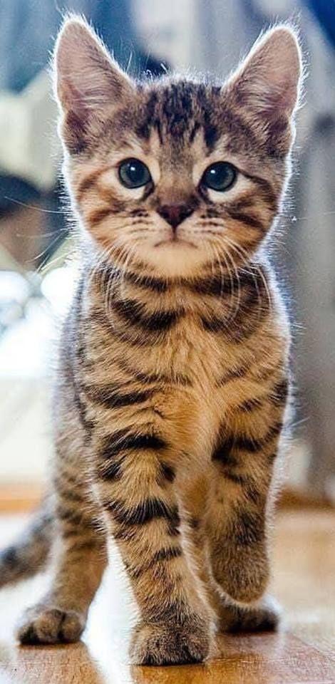 Tabby-Katzen-Galerie - die neun Leben der Katze