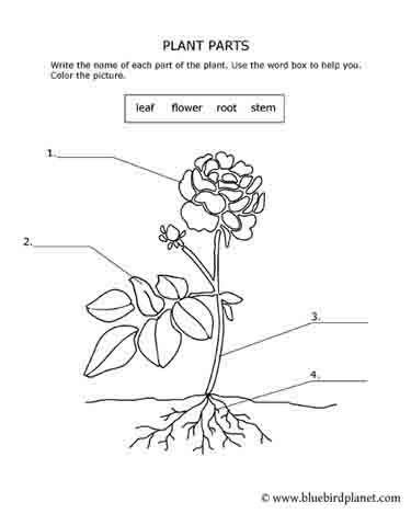 free printable worksheets for preschool kindergarten 1st 2nd 3rd 4th 5th grades plant. Black Bedroom Furniture Sets. Home Design Ideas