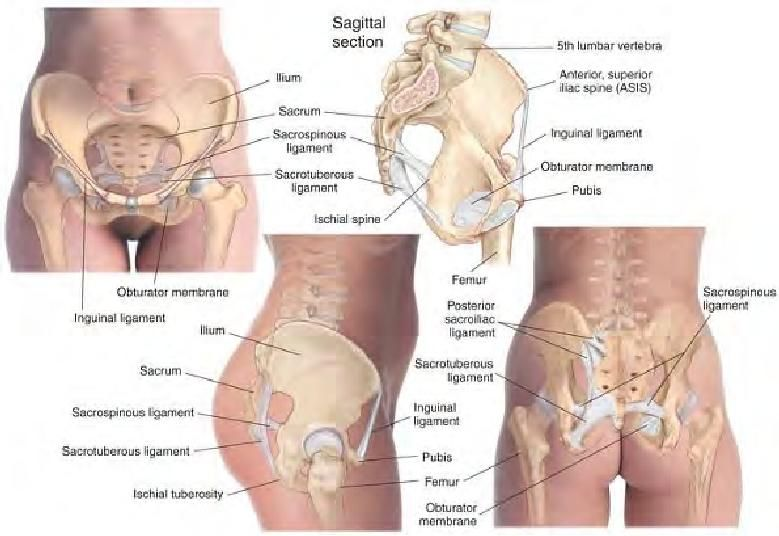 Skeletal Features Of The Pelvic Region From Basic Clinical Massage