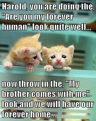 Cute Kittens Photo With Images Cute Funny Animals Kittens