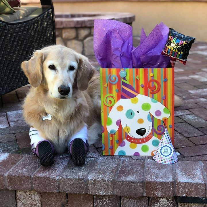 It\'s time to party! You are invited to my 4th Birthday party. We ...