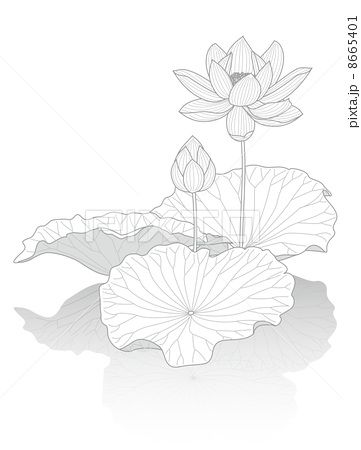 蓮華のイラスト素材 蓮 イラスト 花 イラスト 蓮の花