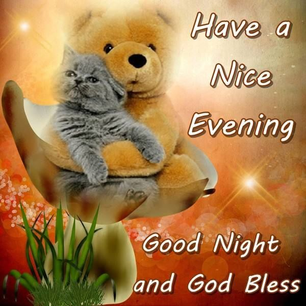 Have A Nice Evening Good Night And God Bless | Good night prayer, Good  night, Good night cat