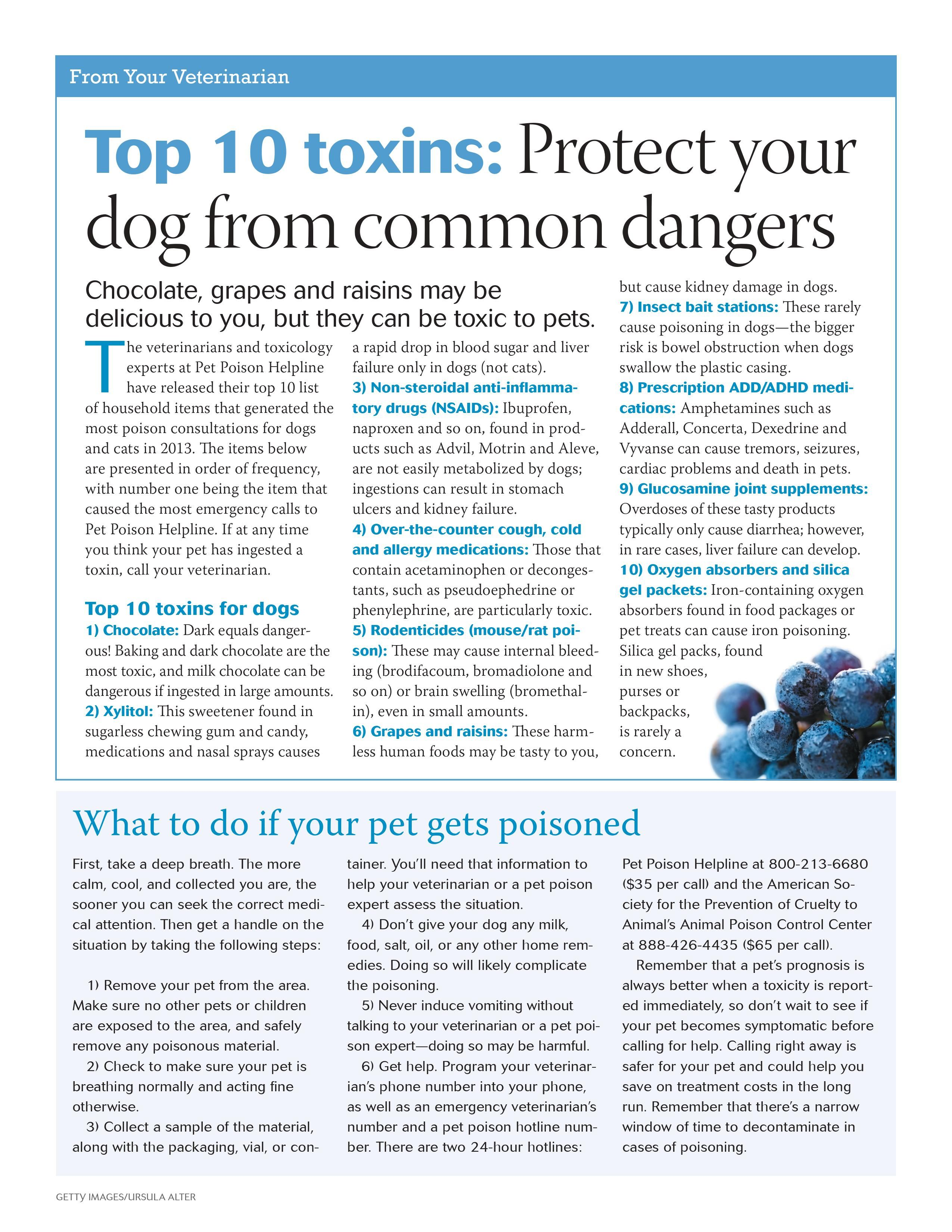 Common Dog Toxins Always Call The Pet Poison Helpline 800 213 6680 Or Your Vet Immediately Dvm360 Dog Wellness Pet Poison Helpline Pet Health Dogs