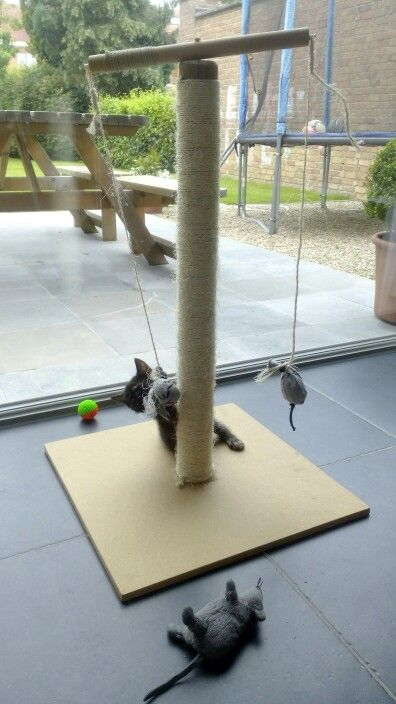 Diy Scratching Post They Love It Especially The Little