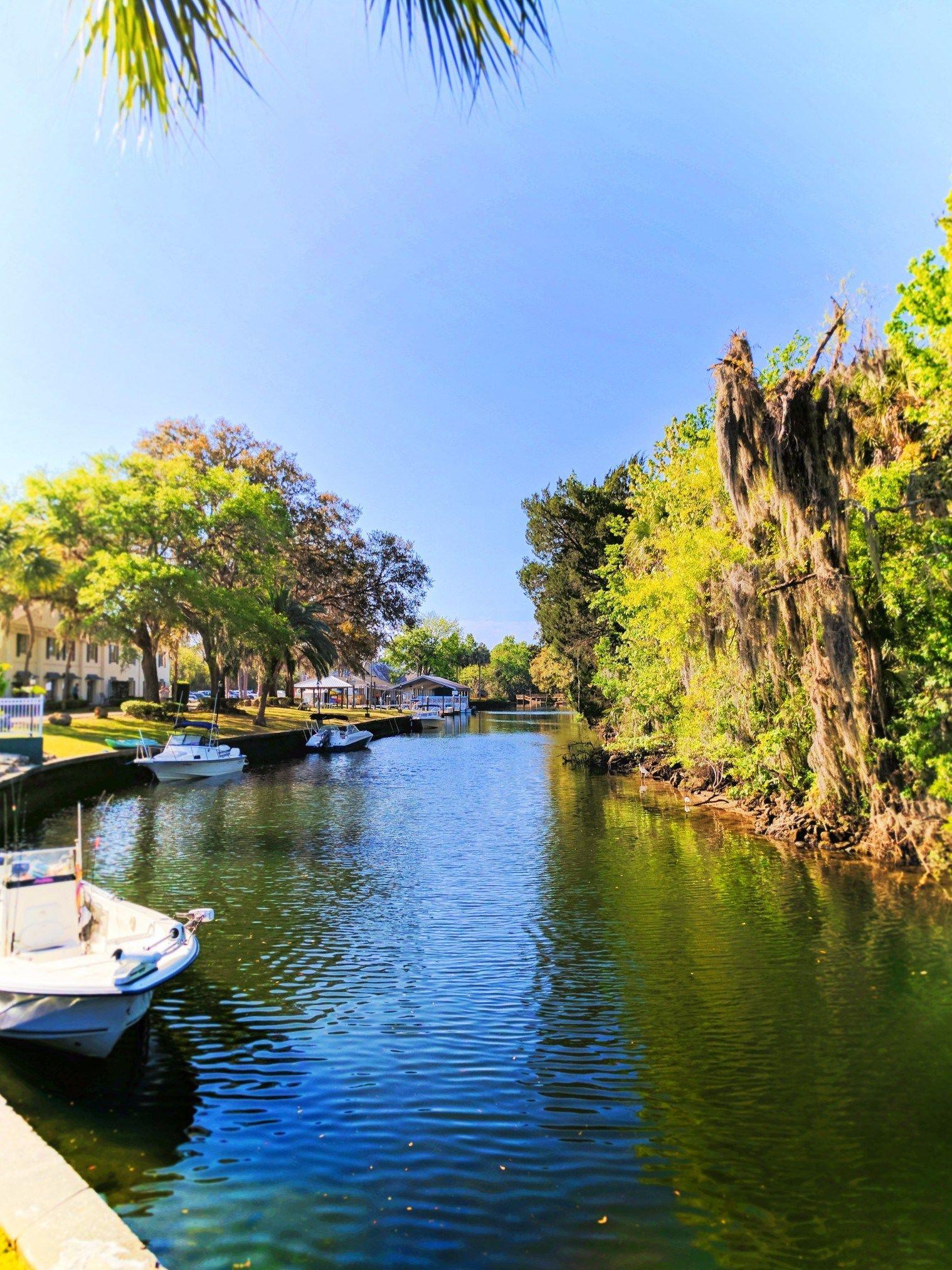 Florida Gulf Coast Road Trip Itinerary gators, manatees