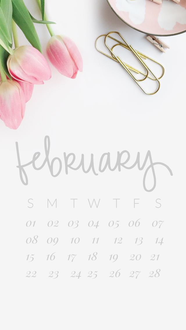 White pink tulips February calendar iphone background