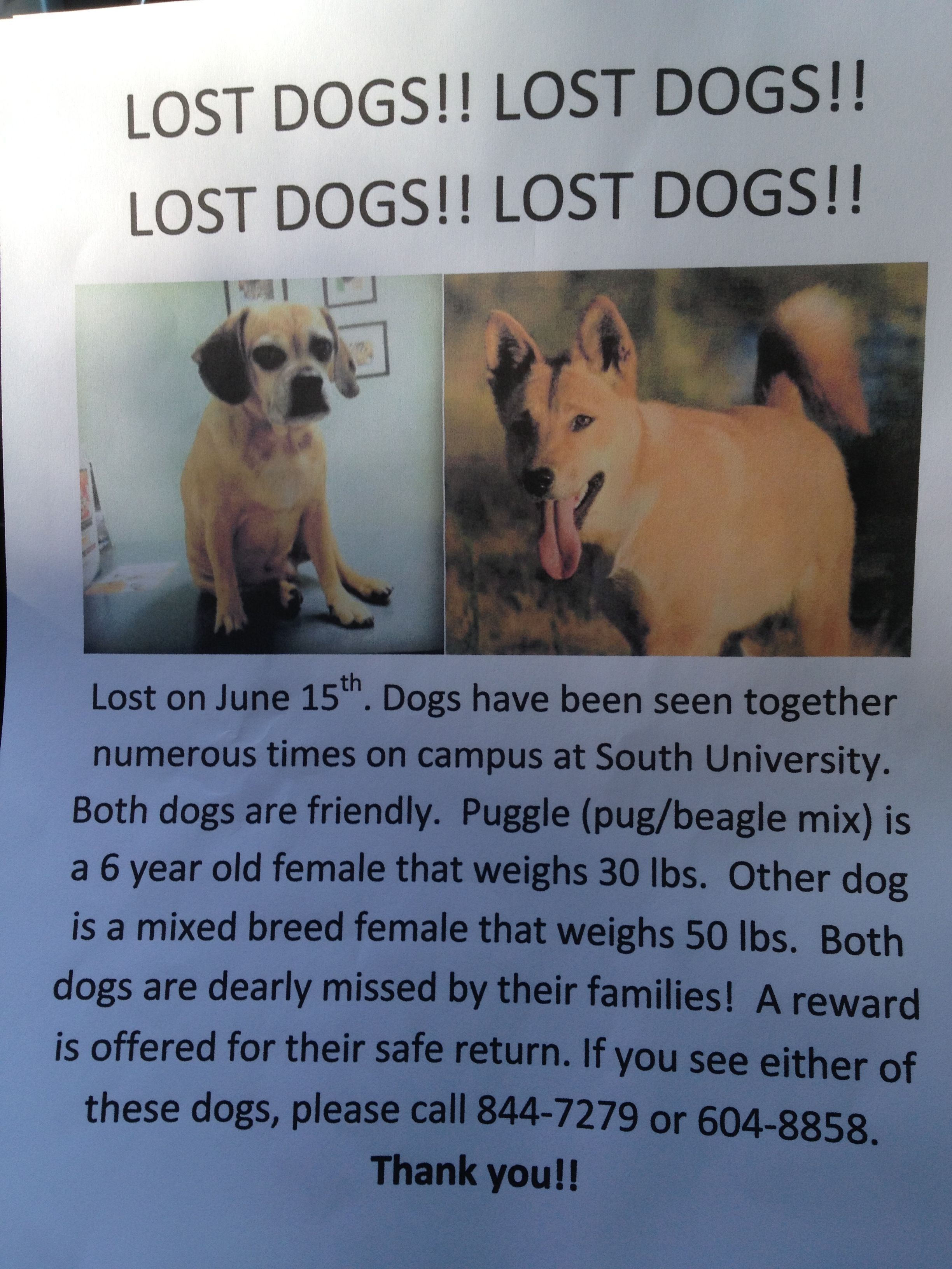 Missing Dog In Savannah Ga Losing A Dog Pug Beagle Mix Dogs
