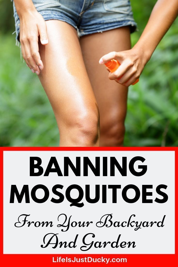 19 Best Ways To Get Rid Of Mosquitoes - Naturally ...