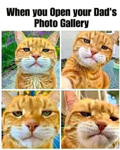 dad selfies | Cats