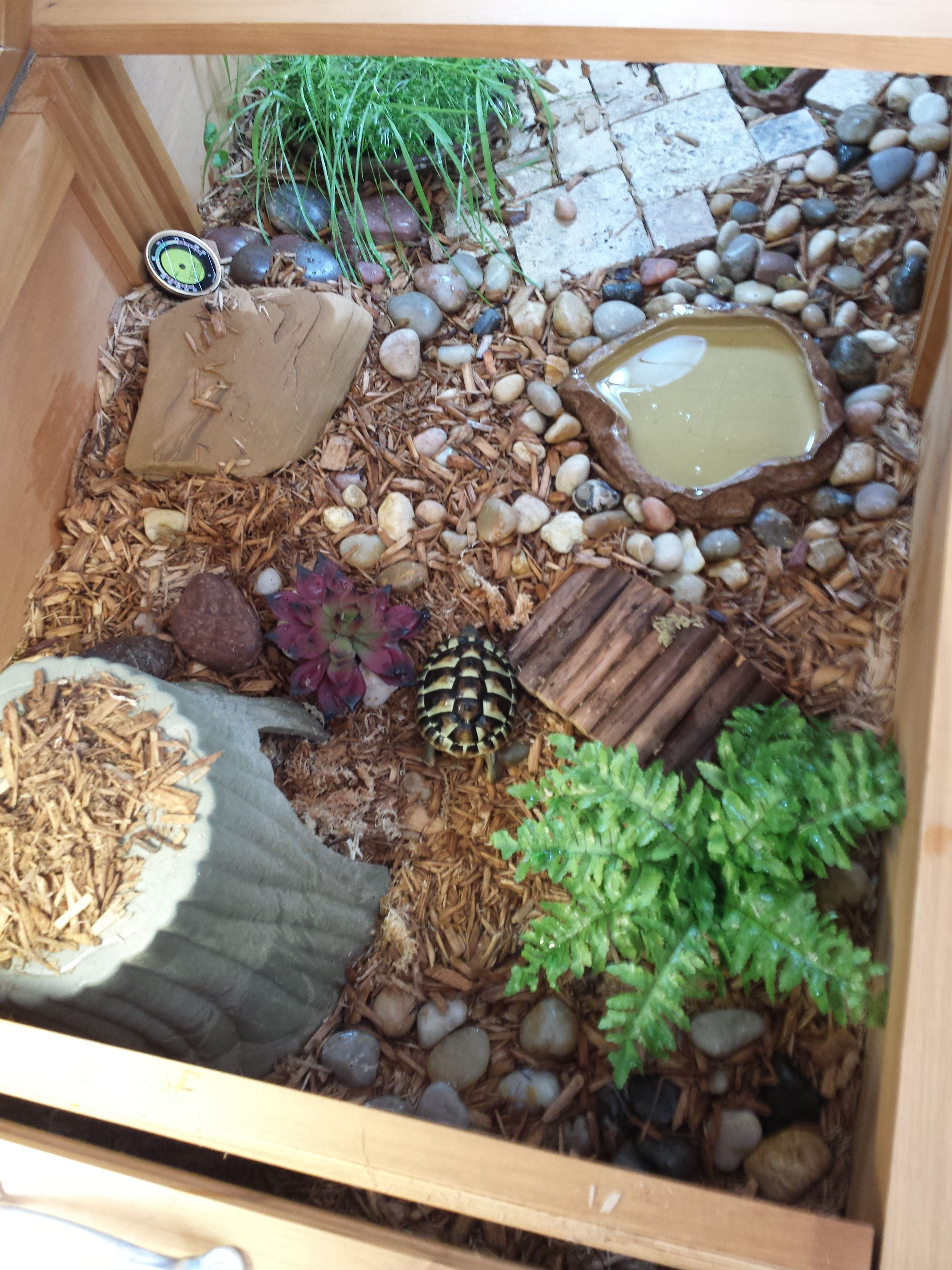 Indoor enclosure tortoise house by zoomed tortoise diet for Estanque para tortugas