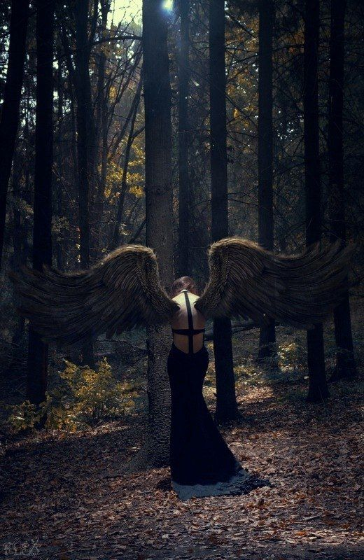 forest Fallen angel