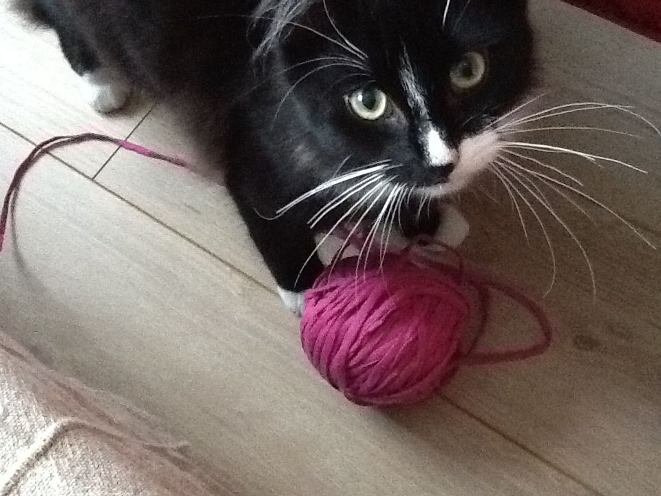 cute cat black and white who likes playing with a ball of wool zpaghetti