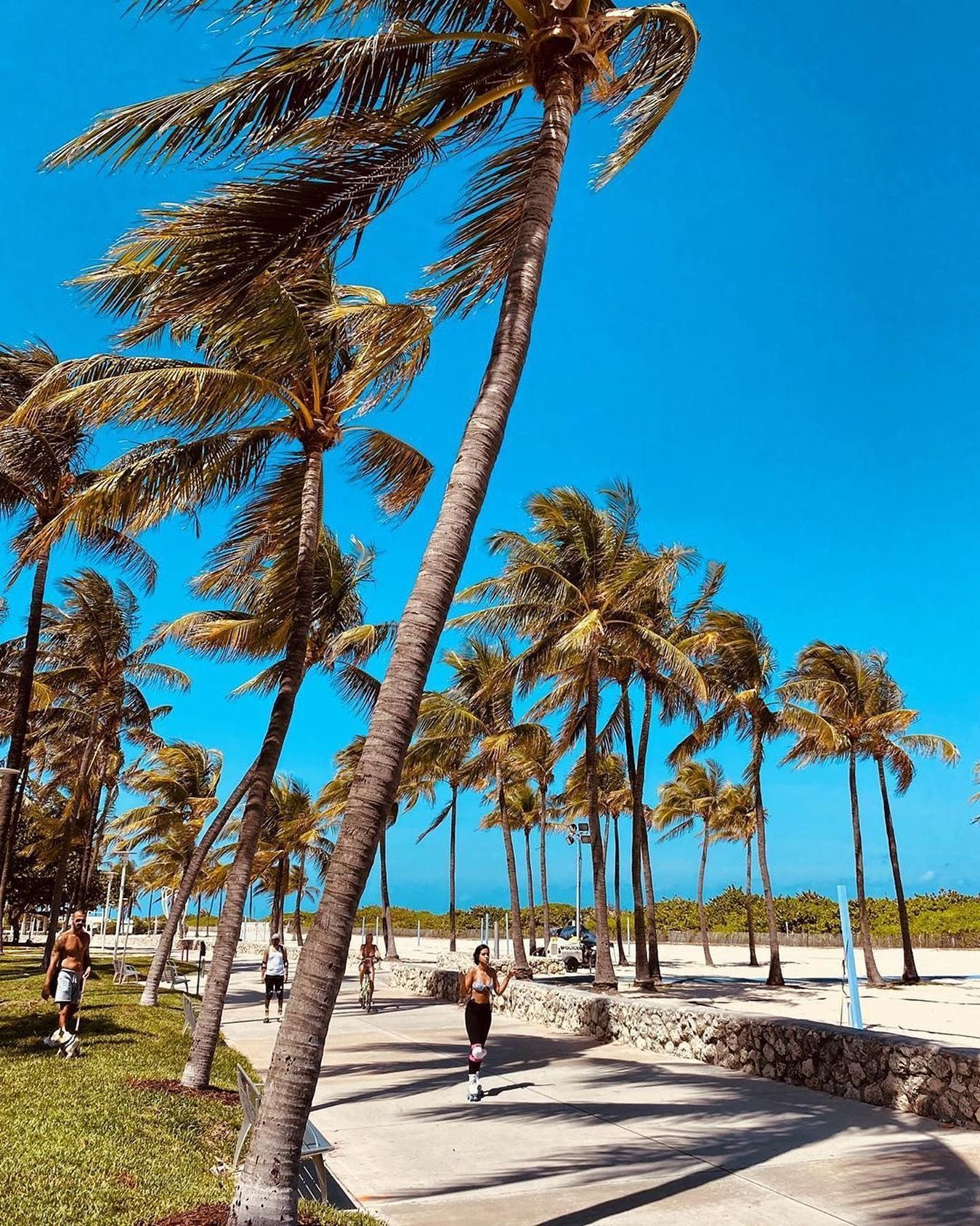 Life is better with palm trees   Tag someone who wants to live in Miami   @smadjita #miamibeach #southbeachmiami #palmtrees #miamiliving #miamilife