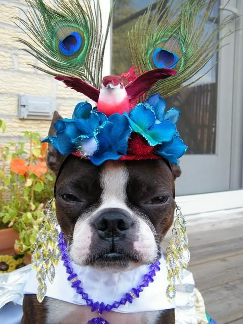 Not amused, hope my mother in law doesn't see this hat, might see it at the 4th of July picnic!