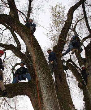 #Treecare experts & Certified #arborist in Stockertown, PA ...