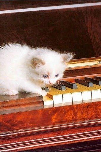 "Kitten ""playing"" piano"