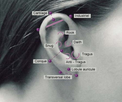 Different ear piercing placement also tantalizing tats pinterest rh