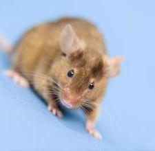 93a00b224b0c3e9b73f882a3d614a25d - How To Get Rid Of Mice In Car Hood