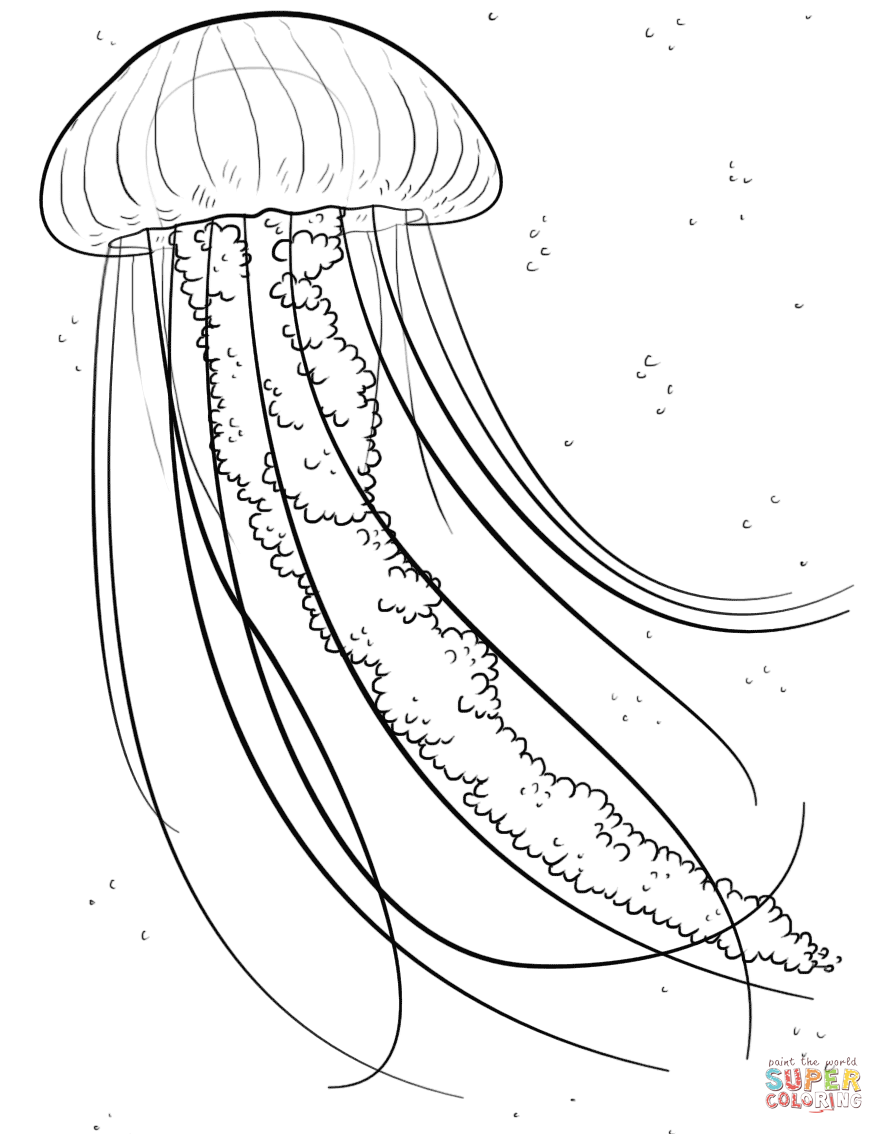 Jelly Fish Coloring Page From Jellyfish Category Select From
