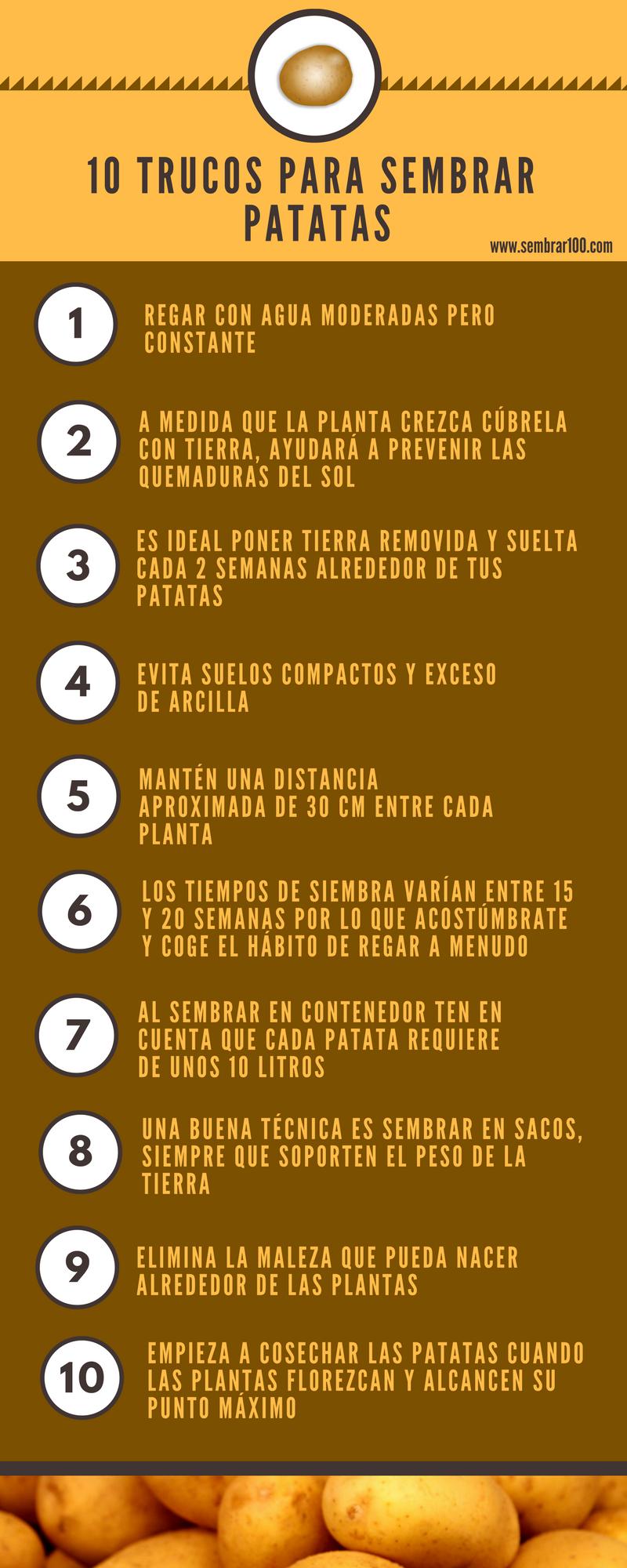 Patatas Cultivo De Hortalizas Huertos Escolares Y Cultivo