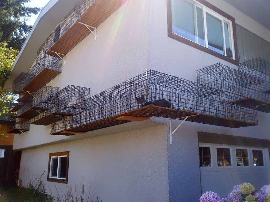 Pasarela al aire libre para gatos curiosos.   pet design   Pinterest ...