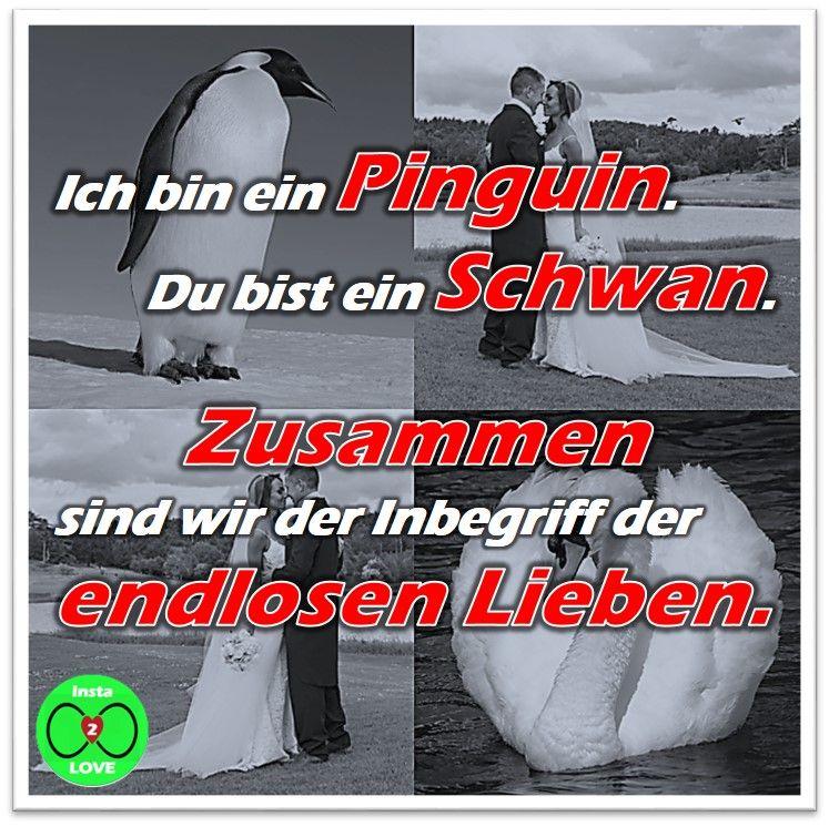 Spruch: Ich bin ein Pinguin. Du bist ein Schwan. Zusammen