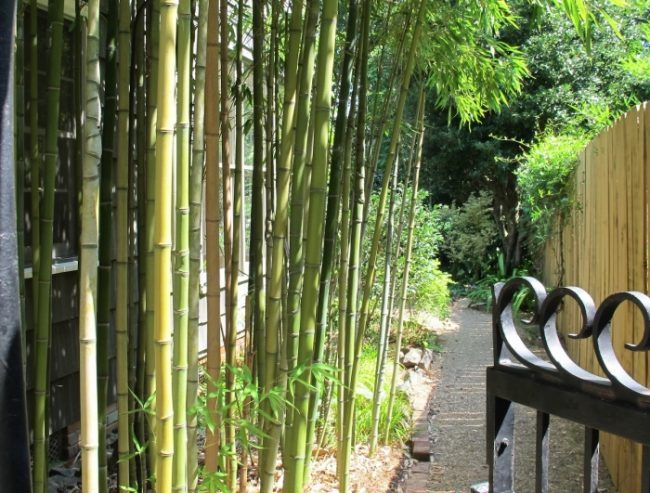Bambus Im Garten bambus im garten pflanzen immergrün pflegeleicht bepflanzen