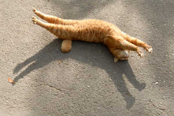 Rigormortis? | Animals | Cats, Cat love, Cat stretching