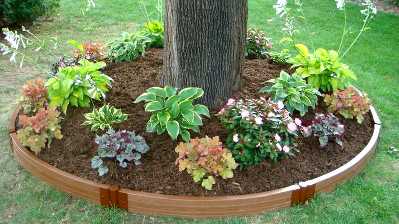 Landscaping Edging Plants : Home ? lawn garden landscaping tree ring landscape border