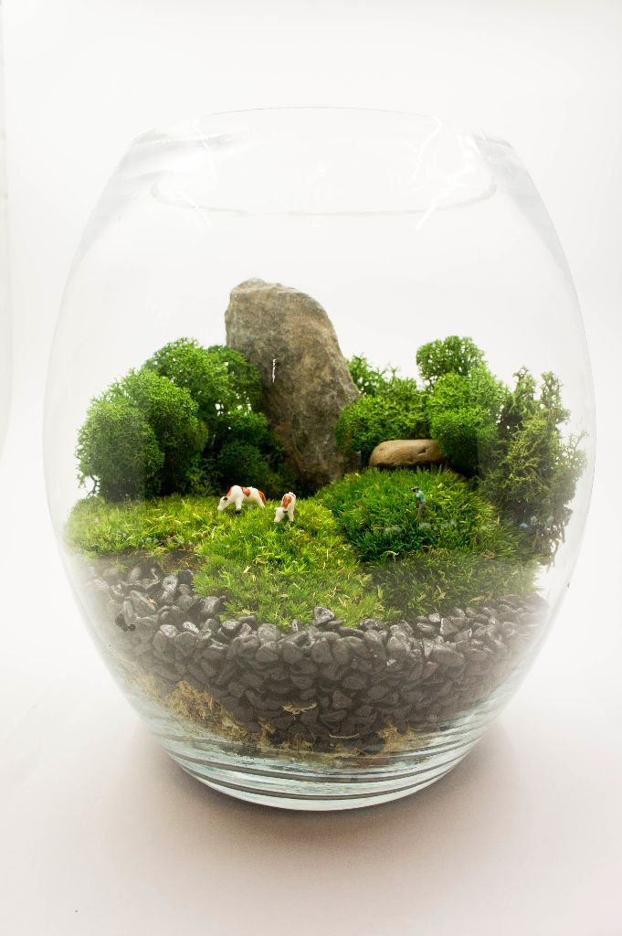 photo geek terrarium what better gift could you offer to a. Black Bedroom Furniture Sets. Home Design Ideas