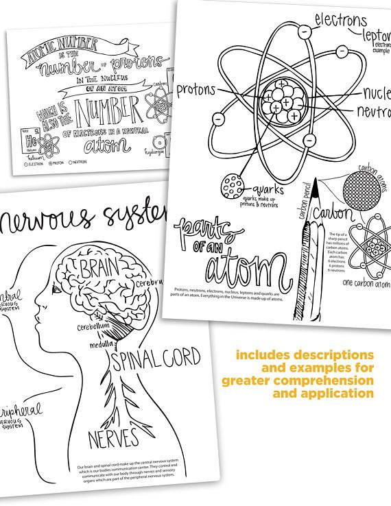 Cycle 3 SCIENCE coloring pages (4th edition) | Pinterest | Chemistry ...