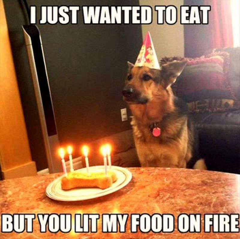 101 Funny Happy Birthday Dog Memes For Paw Lovers Everywhere Funny Happy Birthday Pictures Memes Funny Faces Funny Babies