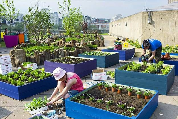Urban Rooftop Garden Designs Changing City Architecture With Green