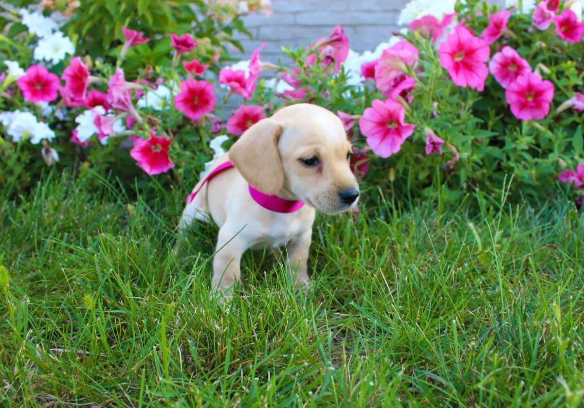 Puppy Finder Cute baby dogs, Baby dogs, Dogs
