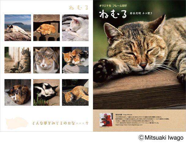 おねむのネコちゃん勢ぞろいニャ 動物写真家 岩合光昭のネコ写真が切手セットに にゃんこ 動物 ねこ