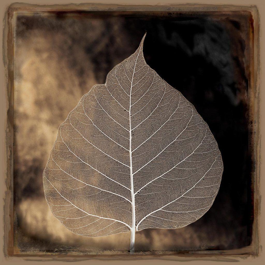 Aspen leaf the aspen tree is symbolic of determination and aspen leaf the aspen tree is symbolic of determination and overcoming fears and doubts buycottarizona