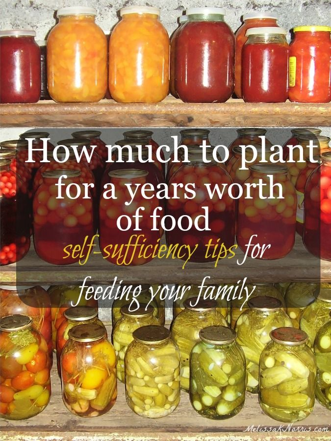 How Much to Plant for a Years Worth of Food