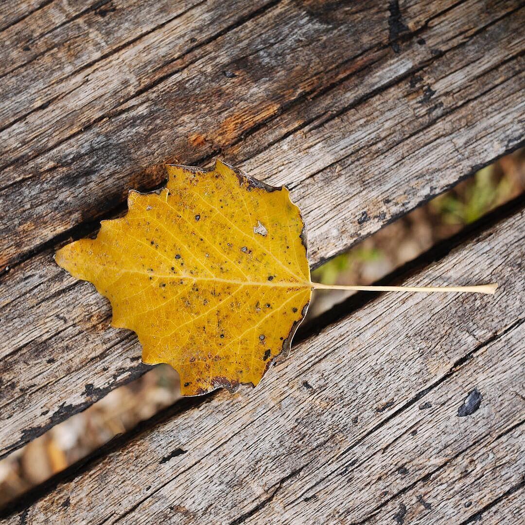 Belleza en todas partes.#autumn #fall #beautyeverywhere