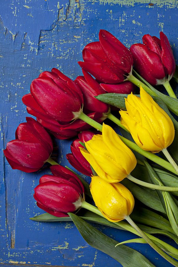 By Gary Gay Red And Yellow Tulips Photograph Red And Yellow Tulips