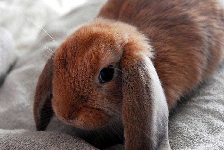 Seizures In Rabbits With Images Best Pets For Kids