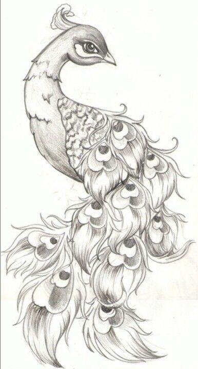 Peacock sketch | Ink Fever | Peacock tattoo, Tattoo drawings, Drawings