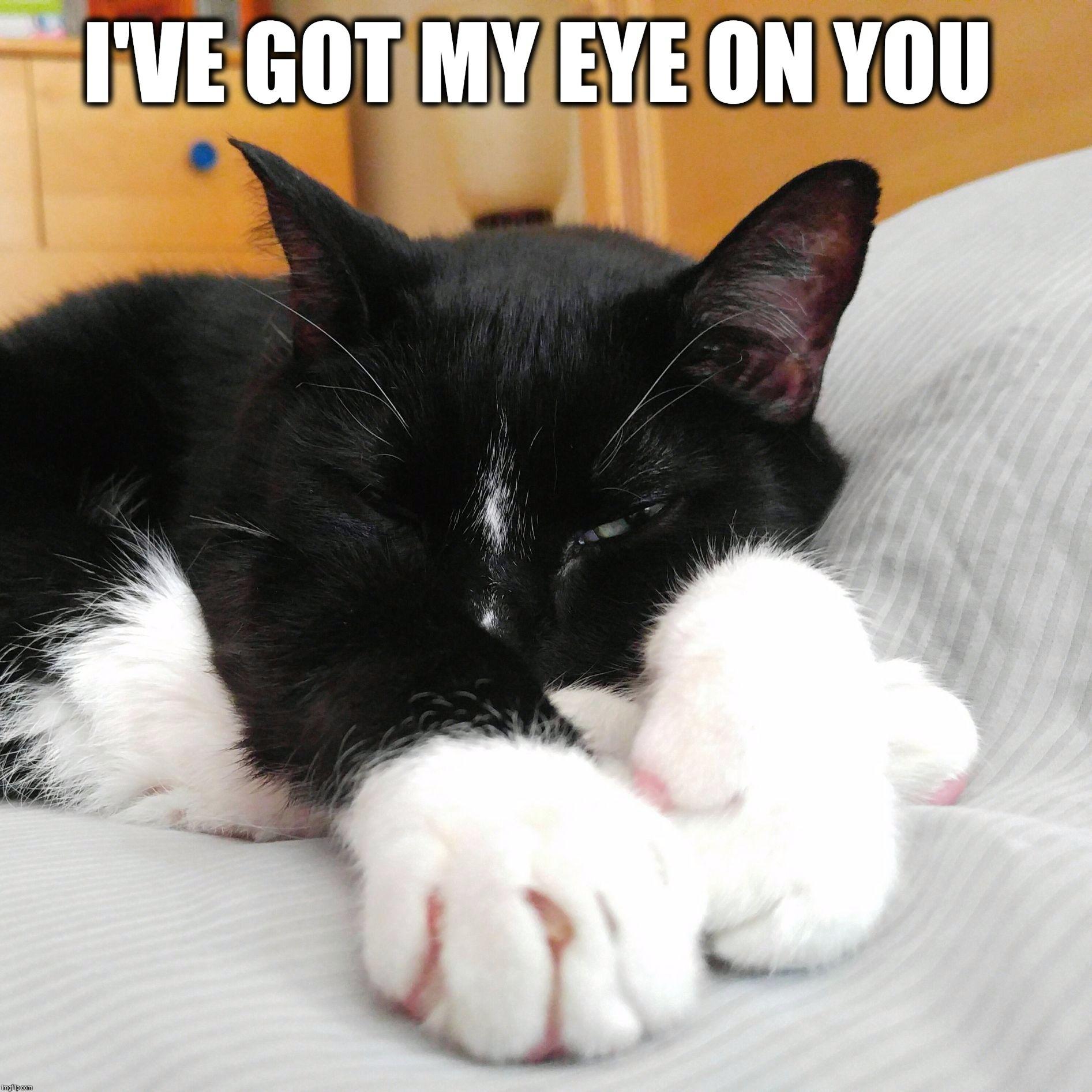 I've got my eye on you Cat memes, Kittens funny, Funny