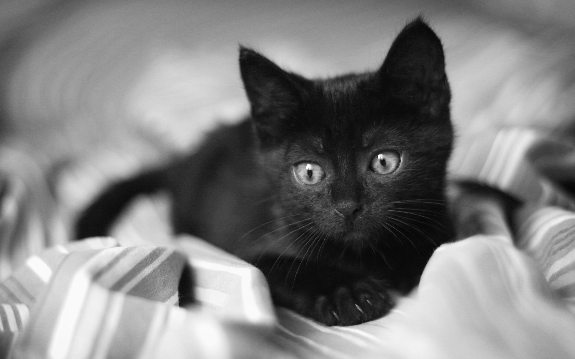 Pin by Emma Fried on black kitties Cute black cats, Cat