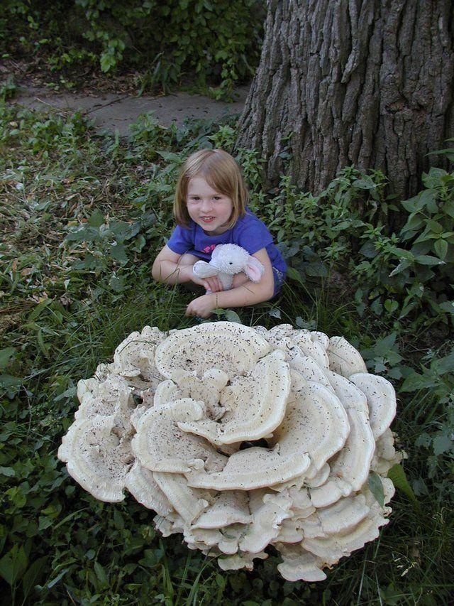 images or large white mushrooms | Giant mushroom amazes Lawrence