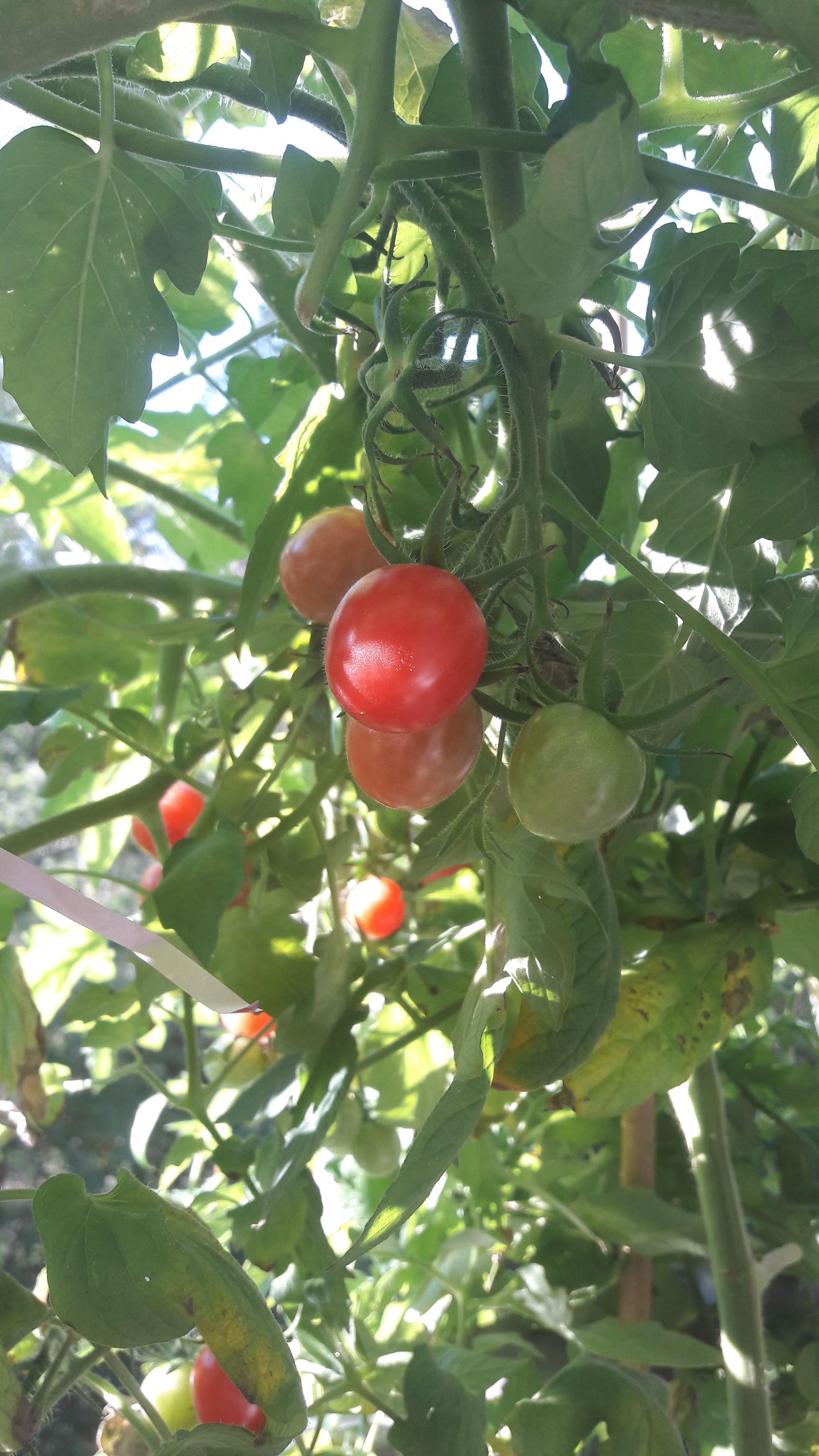 Własne Warzywa W Doniczkach Ogród W Doniczkach Fruit