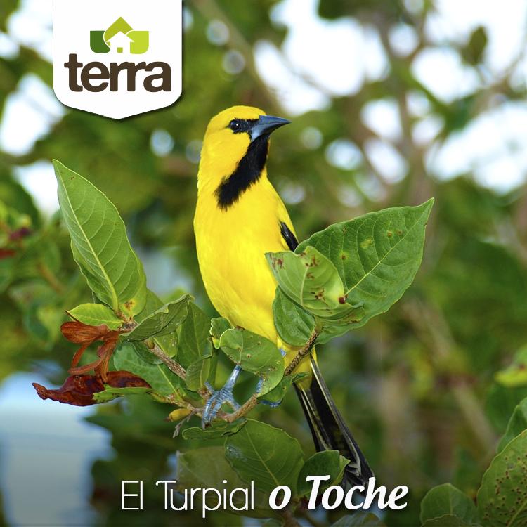 Pin En Aves Y Animales Terra